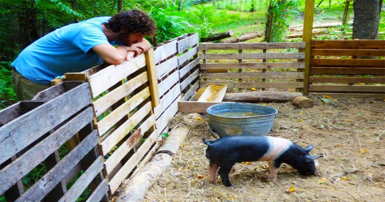 Inventory In The Pig Pen
